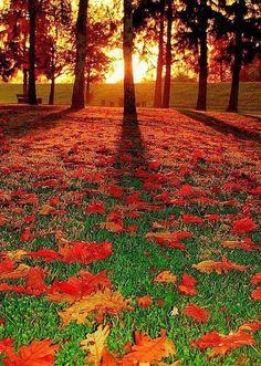 .Outono