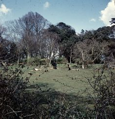 5X Don Jeater Radipole Weymouth Dorset Stereo Realist Stereoview 3D Slides 1970 | eBay