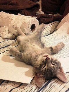 Meló után, hulla fáradtan...
