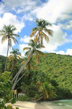 US Virgin Islands travel tips Virgin Islands Vacation, Us Virgin Islands, Saint John Island, I Know A Place, All Inclusive Trips, Hanauma Bay, Johns Island, Vacation Trips, Vacations