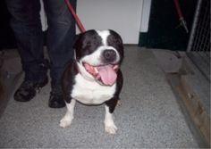 Gevonden ARNHEM 9/7/14  :: Amivedi-Nederland | Stichting voor vermiste en gevonden huisdieren ::
