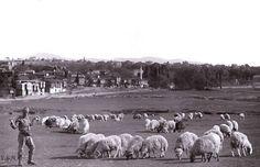 Şimdi yerinde Nautilius AVM bulunan, Kadıköy İbrahimağa Çayırı.. 1920'ler..