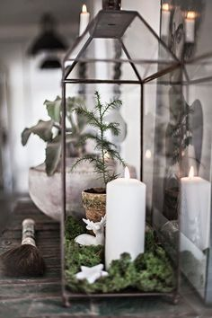 Cute Christmas Vignette, made in a lantern with moss, candle, deer, and mini potted Christmas tree. Could also work in a terrarium.
