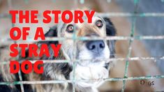 Stray Dog, Shelter Dogs, Videos, Video Clip, Dog Houses