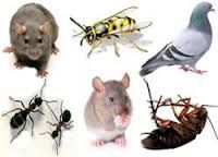 http://www.pestsolutions.co.uk/  Bird control in your premises by experts.We are expert in pest solution providers #BirdControl   #PestSolutions