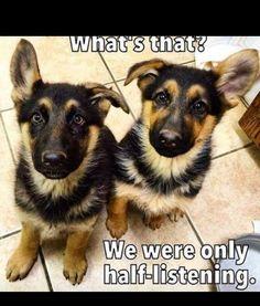 Tooo much cuteness!