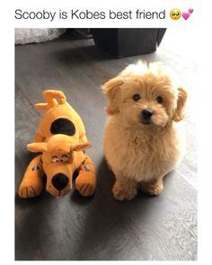 Funny Dog Videos, Funny Animal Memes, Dog Memes, Cute Funny Dogs, Cute Funny Animals, Cute Animal Videos, Cute Animal Pictures, Fluffy Cows, Cute Dogs And Puppies