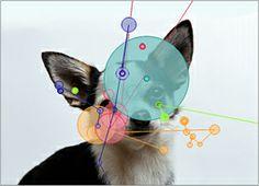 CogniDog -hanke: Katseenseurannan käyttö koirien kokemusmaailman ymmärtämisessä