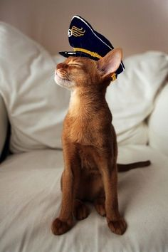 cat in a captain's hat