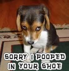 Afbeeldingsresultaat voor humor van honden
