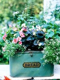 Breadbox container. Luscious flowers in tin cans. More lusciousness at www.myLusciousLife.com