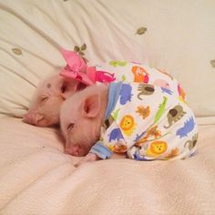 Piglets in Pajamas