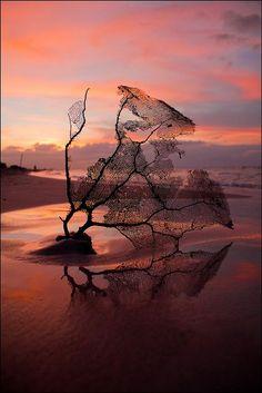 Coral Sunset, Varadero, Matanzas, Cuba, by Enri Turrini, www.toptraveleurope.net