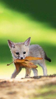 awwwww !!! This is heavy cute !!! * lovestruck * ♥♥♥