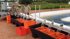 Algae technology ready to expand in 2015