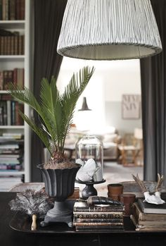 Southern Hi-Lite. Gotta love a room with curiosities, antiques and a cycad.