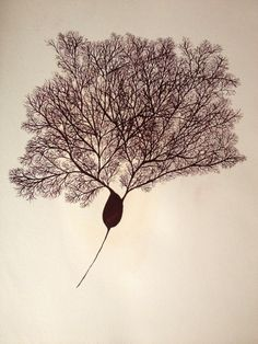 Original Gouache Painting of a Purkinje Neuron by JshrewArt, $355.00
