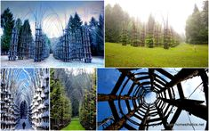 A Majestic Cathedral Made Of Living, Breathing Trees