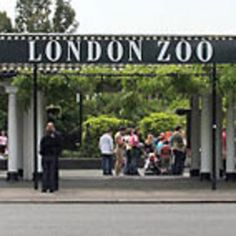 london zoo - Google Search