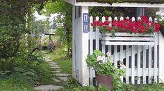 Annelin villi ja vapaa puutarha on ihmettelyn aihe | Yle Uutiset | yle.fi