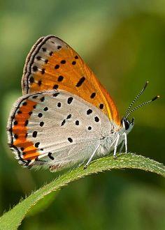 Butterfly by Gerald DeBoer