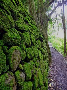 Moss-covered Rock Wall -cant get better than this!
