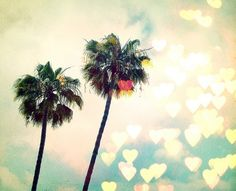 California Los Angeles Palm Trees Nature Bokeh by urbandreamphotos Art Prints For Sale, Fine Art Prints, Los Angeles Palm Trees, Surf, Tropical, California Dreamin', Summer Of Love, Pink Summer, Summer Dream