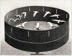 Zootrope avec 10 statuettes d'un goéland dans les attitudes successives du vol. Ca me donne des idées tout ça ...