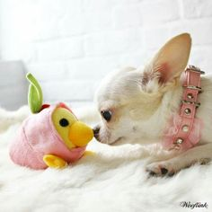You're just as cute as a Chick in a pink sweater with green ears...