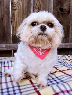 Baby dog looks so adorable in this pink bandana collar