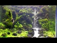 Setting up planted nano aquarium - timelapse - YouTube