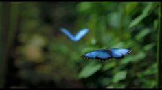 O Maravilhoso Mundo da Polinização! Neste video podemos ver os Polinizadores do nosso Planeta que produzem 1/3 daquilo que nós comemos. A sedutora dança entre Flores e Polinizadores que sustêm a Fábrica da Vida.