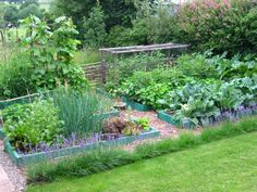 permaculture vegetable garden, must tidy up the garden and create this!