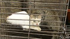 Save Cats and Dogs in South Korea from Brutal Deaths. Please sign this petition. Takes 2 seconds.