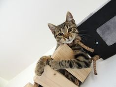Cats, Animals, Design, Gatos, Animales, Animaux, Animal, Cat, Animais