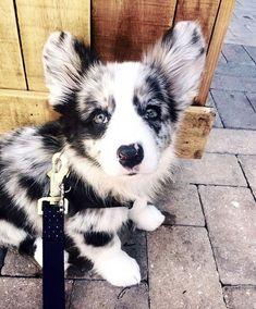 Dog And Puppies Drawings .Dog And Puppies Drawings Cute Dogs And Puppies, Baby Dogs, Doggies, Cute Little Animals, Cute Funny Animals, Beautiful Dogs, Animals Beautiful, Cute Animal Pictures, Cute Creatures