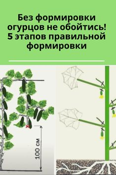 Small Farm, Permaculture, Landscape Design, Herbs, Sodas, Plant, Garten, Landscape Designs, Herb