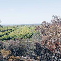 Above the green sea #parcodellamaremma #igersmaremma #hiking #autumn