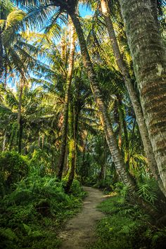 Off the Beaten Path: The Trails of Ritidian Beach - The #Guam Guide