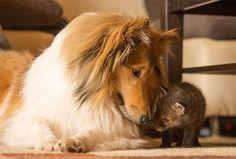 perro y zorro