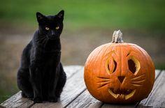 Halloween Cats | Flickr - Photo Sharing!