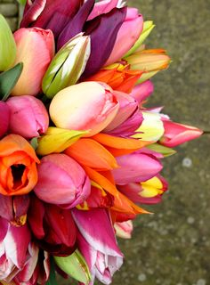 english heritage tulips - Google Search