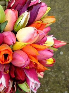 english heritage tulips - Google Search