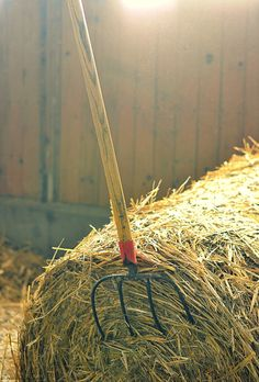 Hay Bale. Love the smell of hay.  Walked into my shed the other day & it's a smell mix of hay, leather, feeds & gasoline (seedeater,chainsaw, etc).  Best smell in the world  ;)