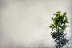 foggy @watuamben wonosari, jogjakarta