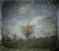 Angustown Tree in Autumn. cynthia-lassiter.artistwebsites.com