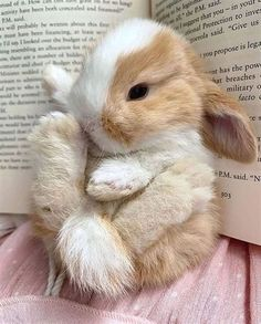 Are rabbits easy to look after?