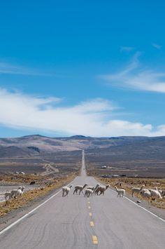 Llama crossing, Colca Canyon   Peru (by yosch)