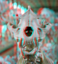 The Animal Skull - 3D Anaglyph Photography.
