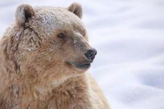 Napa im Winter Brown Bear, Polar Bear, Winter, Animals, Baby Cubs, Arosa, Vet Office, Animal Welfare, Winter Time